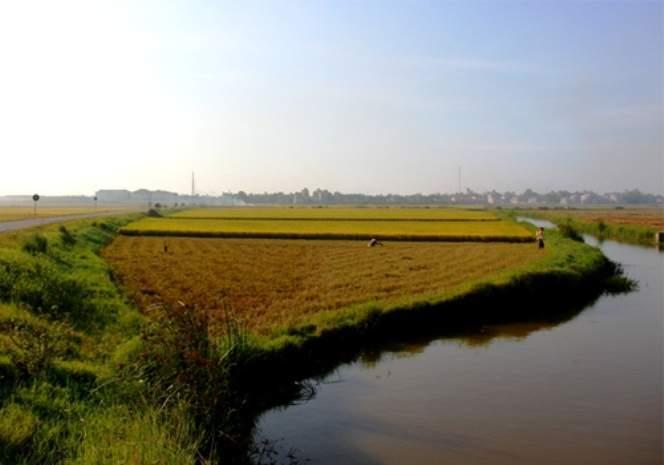 Ruộng lúa vừa gặt xong