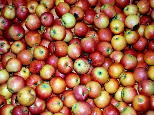 8 loại rau củ quả bạn nên ăn trong mùa thu đông 2