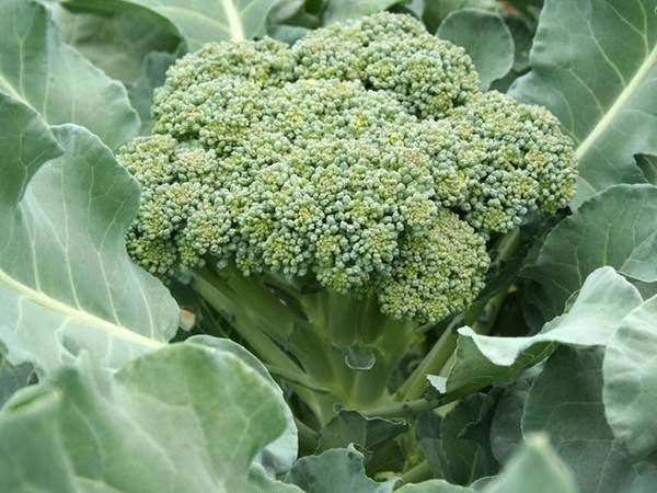 8 loại rau củ quả bạn nên ăn trong mùa thu đông 4