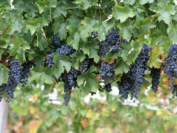 8 loại rau củ quả bạn nên ăn trong mùa thu đông 8