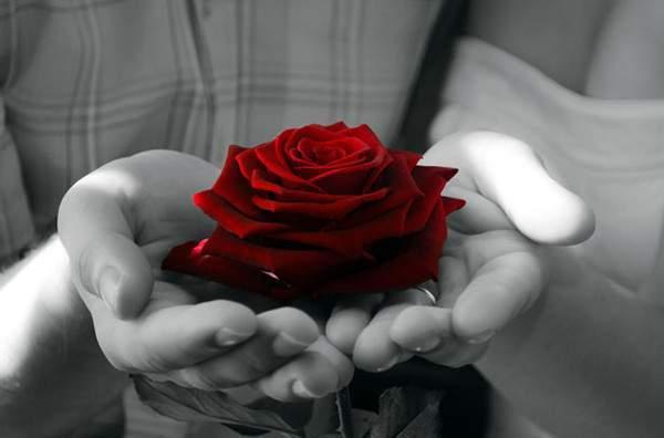 Câu chuyện về người ăn mày và một bông hồng nhỏ