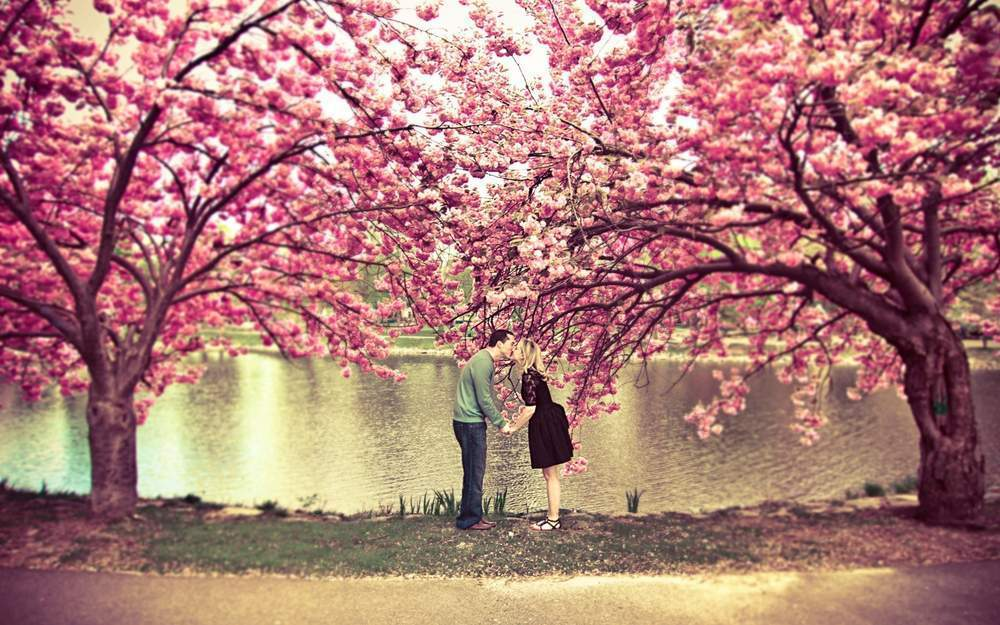 Khung Cảnh Lãng Mạn Với Hình ảnh Của Những Rừng Cây Màu Hồng
