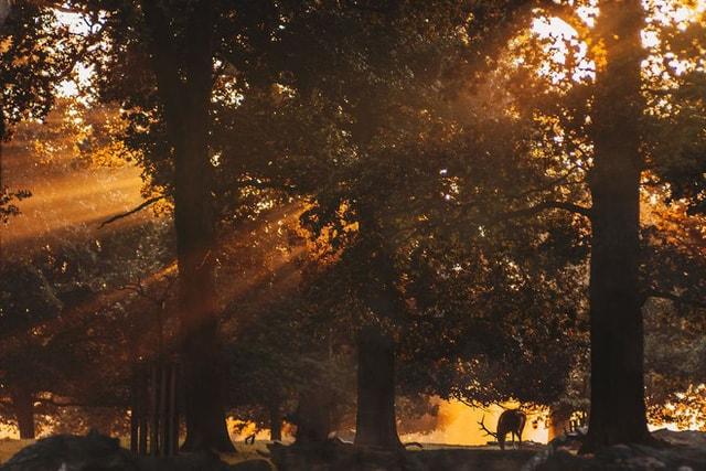 mùa thu, nhiếp ảnh gia, câu chuyện cổ tích, tác phẩm nghệ thuật, thủ đô London, cua so tinh yeu