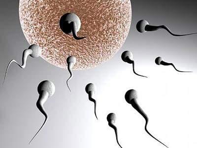 vô sinh nam, quan hệ, sức khỏe sinh sản, bộ phận sinh dục, tinh trùng, dương vật, tinh dịch, tinh hoàn,