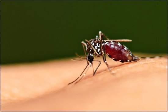 sốt rét, trẻ em, bệnh truyền nhiễm, trùng sốt rét plasmodium, muỗi anopheles, chẩn đoán, sốt rét ác tính, điều trị,