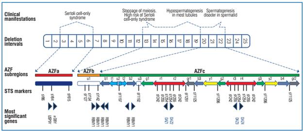 Xét nghiệm, vô sinh nam, đột biến gen AZF, hiếm muộn, vô sinh