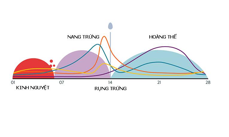 Lượng máu trong chu kỳ kinh nguyệt bình thường của phụ nữ theo độ tuổi