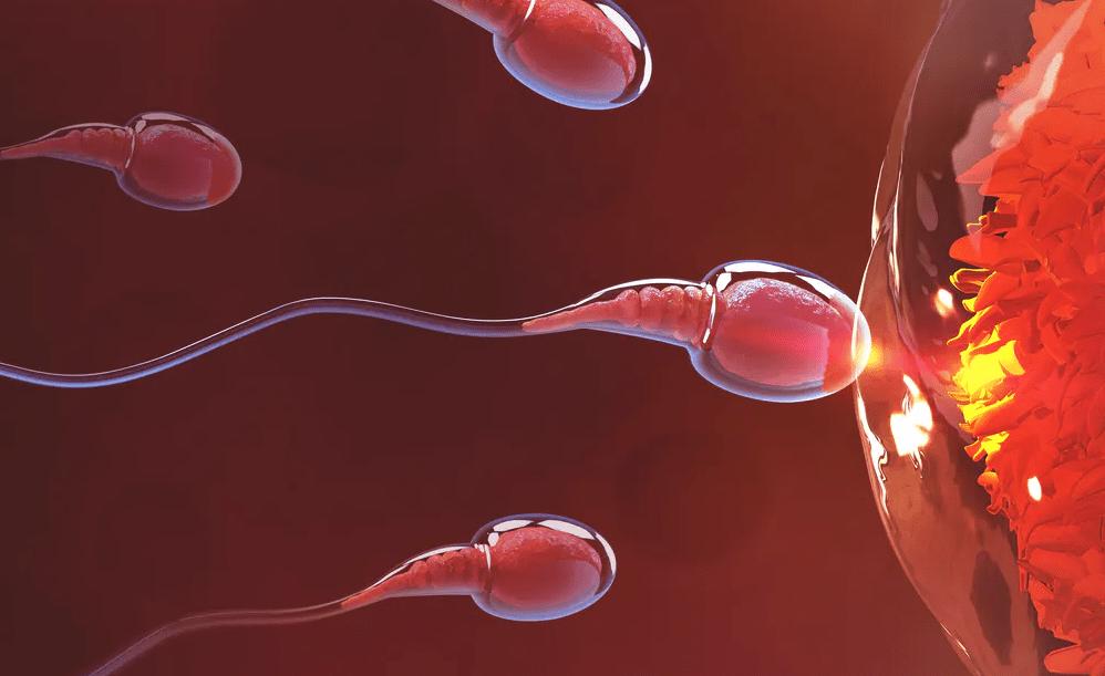 Đi tìm lời giải đáp vì sao nam giới bị vô sinh nhưng vẫn có thể có con tự nhiên