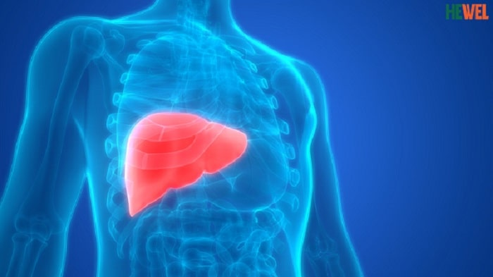 Xét nghiệm tầm soát ung thư gan và những điều cần biết