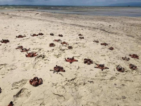 Dân mạng chỉ trích mạnh mẽ việc du khách 'sống ảo' khiến sao biển chết khô