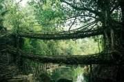 Cầu rễ cây nằm tại ngôi làng Cherrapunji, bang Meghalaya, Ấn Độ.