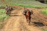 Bạn sẽ bắt gặp những con ngựa thồ gỗ của người dân tộc.