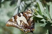 Hình ảnh sâu lột xác thành bướm