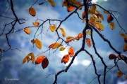 Những chiếc lá cuối cùng còn sót lại trên những cành cây khẳng khiu