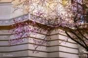 Hoa nở trong một sáng mùa đông có nắng ở Pháp.