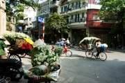 Những giỏ hoa chất đầy cúc họa mi trắng muốt trên phố