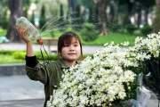 Hoàng Quyên sinh viên năm thứ 3 trường Cao đẳng Du lịch, quê ở Tuyên Quang, đã bán cúc họa mi mùa thứ 2.