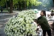 Một gánh hoa như thế này, Quyên sẽ thường bán hết từ sáng tới chiều