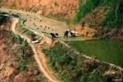 Những cánh đồng ở xã Cao Phạ, huyện Mù Cang Chải, tỉnh Yên Bái, cũng đang vào mùa gieo cấy.