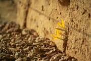 Sức sống mãnh liệt của những mầm cây vươn lên từ gạch đá