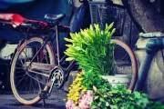 Loa kèn đầu mùa trên đường phố Hà Nội