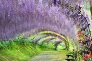Vườn hoa tử đằng Kawachi nằm ở tỉnh Fukuoka