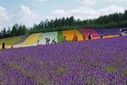 Trang trại Tomita ở Hokkaido có 3 nơi trồng hoa oải hương là khu phía Đông