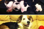 Ảnh ngày ấy - bây giờ dễ thương của thú cưng và đồ chơi