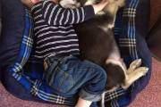 Ngủ ngon cùng cún cưng.