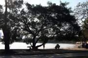 Hồ Bảy Mẫu là một hồ nước ngọt nằm trong công viên Thống Nhất