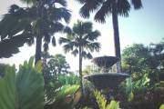 Khu vườn ở Intramuros, Manila, Philippines.
