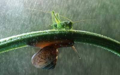 Nhiếp ảnh gia Vadim Trunov đã kiên trì ghi lại những khoảng khắc tuyệt đẹp về ốc sên và côn trùng vào một ngày mưa trong khu vườn nhà ông ở vùng Voronezh, Nga.