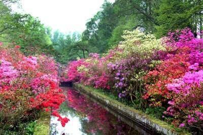 Khu vườn mùa xuân Keukenhof thuộc thị trấn Lisse, Hà Lan.