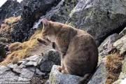 chú mèo, đỉnh núi, ba lan, cửa sổ tình yêu