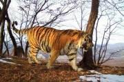 động vật hoang dã, hổ cầu cứu người, chuyện lạ thế giới, cua so tinh yeu