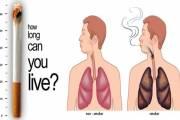 Những cơ quan bị tổn thương bởi thuốc lá ngoài phổi, cơ quan, tổn thương, thuốc lá, cua so tinh yeu