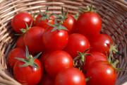 Cà chua, sữa tươi, dưỡng da, cửa sổ tình yêu.