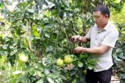kinh tế nông thôn, tăng thu nhập, trồng cây ăn quả, trồng cây trên đất dốc, xóa đói giảm nghèo, cua so tinh yeu