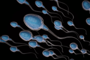 tinh trùng, sinh sản, mất đuôi, ảnh hưởng, hình dạng bình thường, cuasotinhyeu
