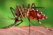 hiv, lây truyền, hiv từ muỗi đốt, dạ dầy muỗi, muỗi đốt truyền hiv