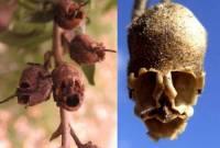 loài hoa, đầu lâu, chuyện lạ, cua so tinh yeu