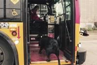 cún tự bắt xe bus, chuyện lạ thế giới, cua so tinh yeu