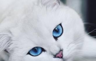 mạng xã hội, mèo nổi tiếng, đôi mắt hút hồn, cua so tinh yeu