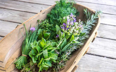 Các loại rau có tác dụng chữa bệnh nên dùng thường xuyên trong mỗi bữa ăn