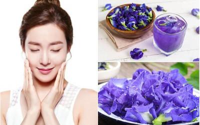 Trà hoa đậu biếc – yêu thương sức khỏe của phái đẹp