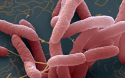 Bệnh Whitmore- vi khuẩn ăn thịt người và những điều nên biết
