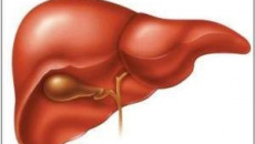 viêm gan a, lây nhiễm viêm gan a, biểu hiện của bệnh viêm gan a, biến chứng của bệnh viêm gan a, viêm gan a cấp tính, viêm gan a tối cấp, viêm gan a kéo dài, điều trị viêm gan a, phòng bệnh viêm gan a