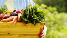 mẹo làm vườn, sân vườn, vườn xanh, trồng cây, không gian sống xanh, sống xanh