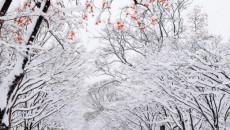 Những điều cần biết khi đi du lịch mùa đông Hàn Quốc