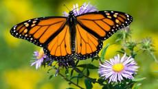 Làm việc như một con kiến và hưởng thụ cuộc sống như một con bướm